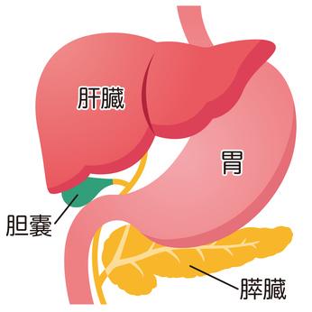 天王寺区の肝臓内科なら大阪市のさいとう消化器内科クリニック